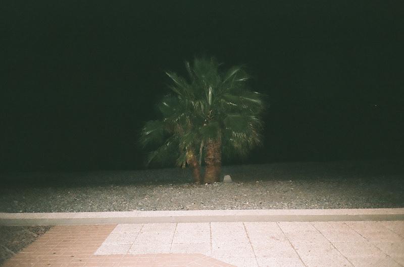 palmier - de nuit.jpg