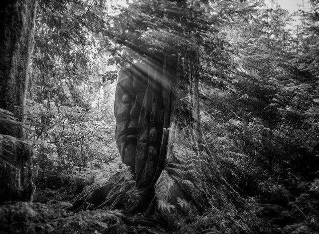 Treeface11x15.jpg