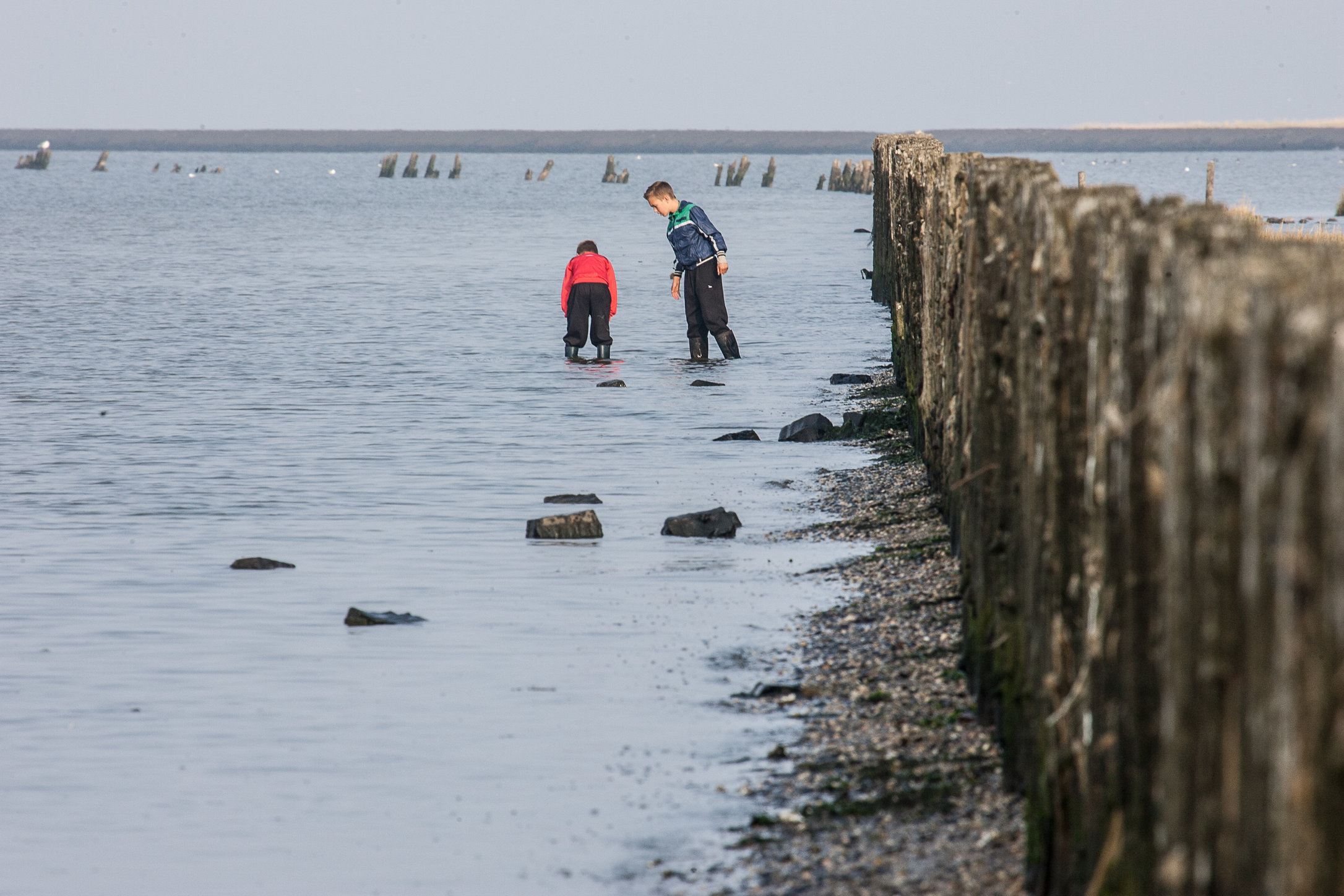 Boys searching for oysters