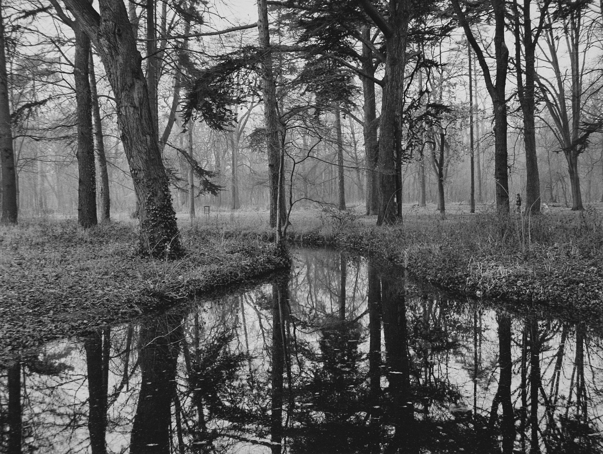 Trees  06.jpg