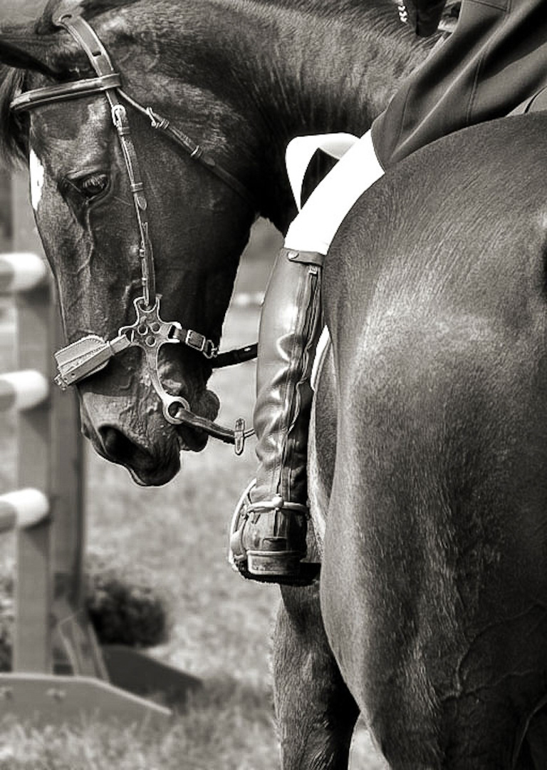 plantation_Horse_Trials-0340.jpg