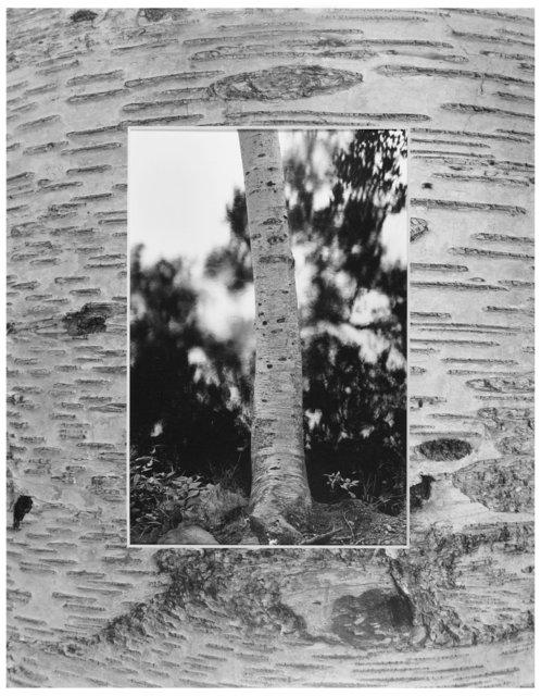 Trees  31.jpg