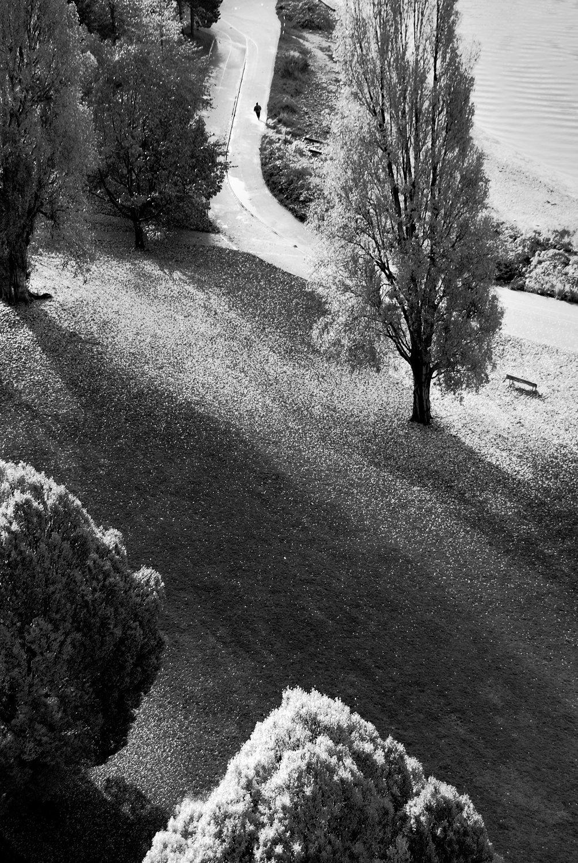 Tree-bw40.jpg