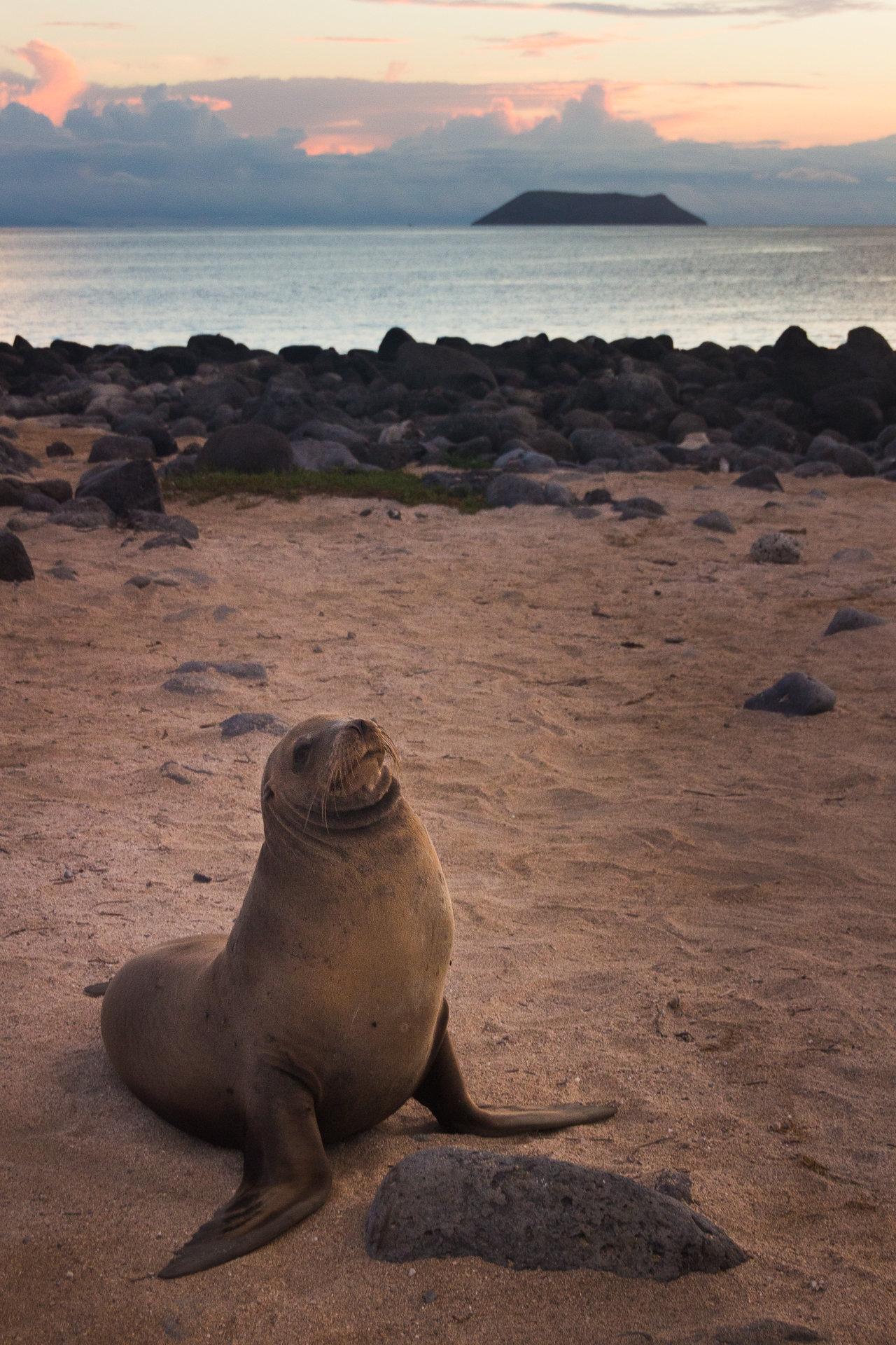 150418_Galapagos-1122.jpg