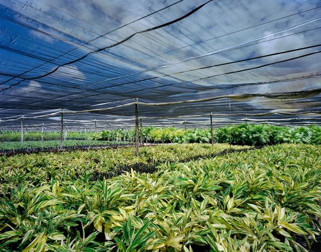 plant nursery, FL