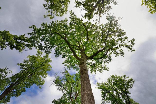 Forêt du Perche
