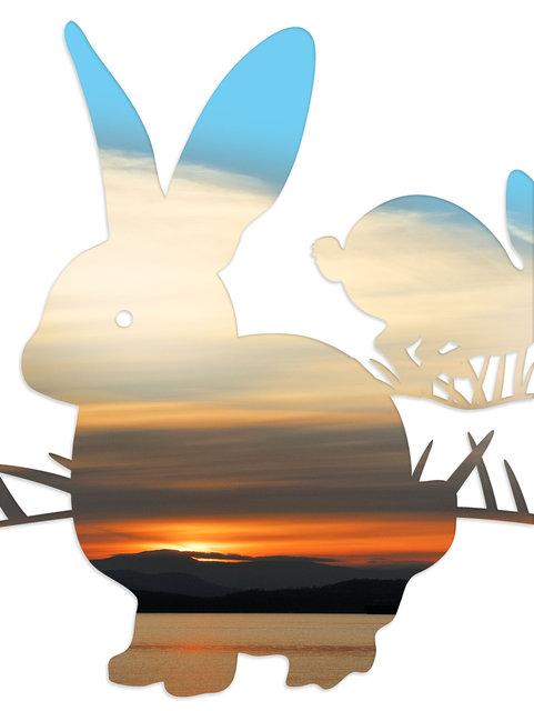 rabbit-05.jpg