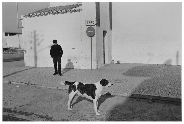 Dog  007.jpg