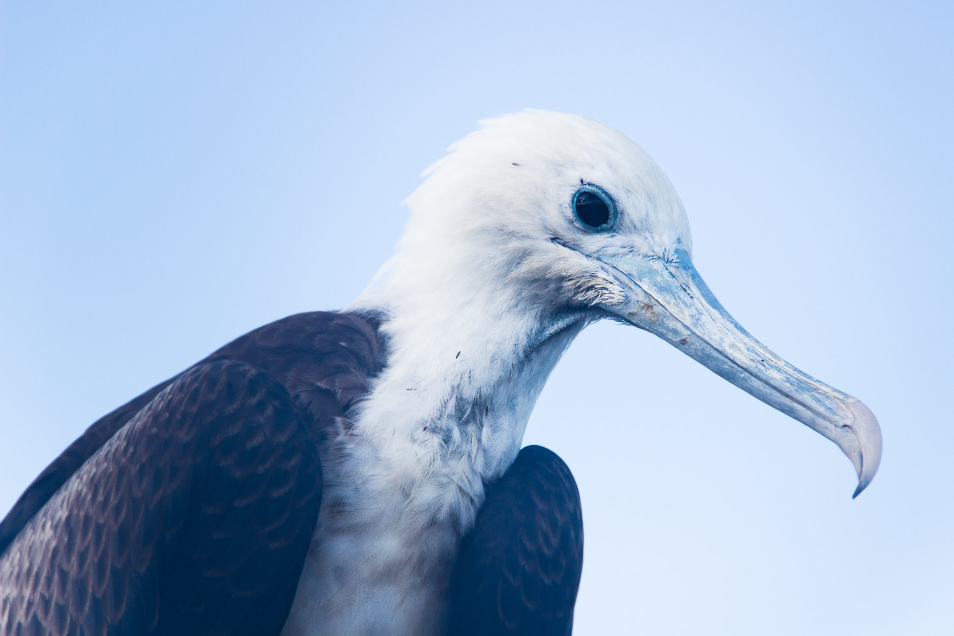 150418_Galapagos-1035.jpg