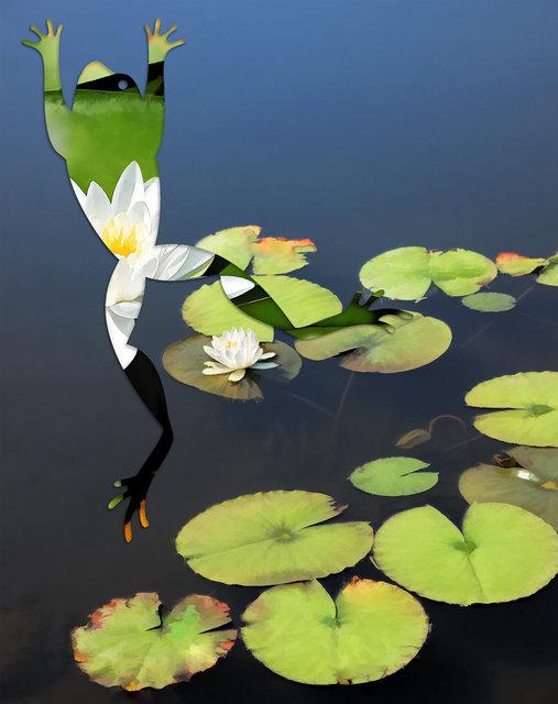 frog-006.jpg