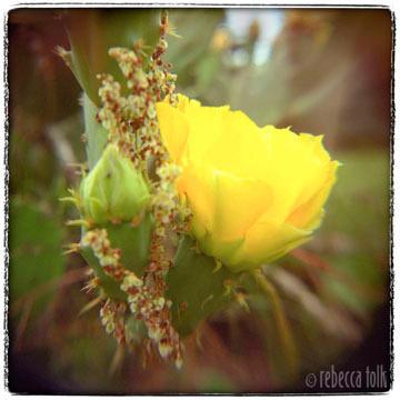 05-05-03-09 Garland.jpg