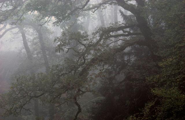 La haute forêt