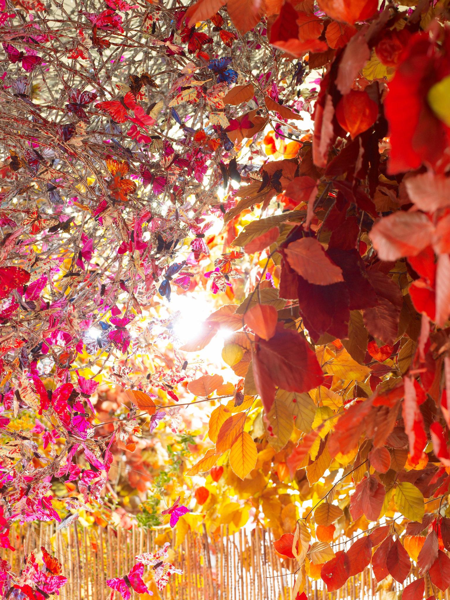 autumn-007053.jpg