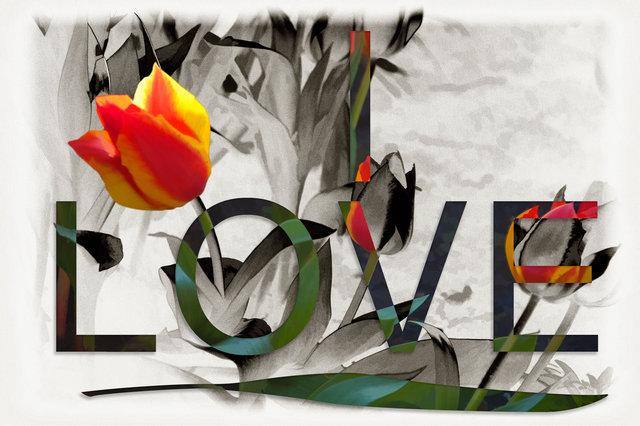 tulip love-fgy.jpg