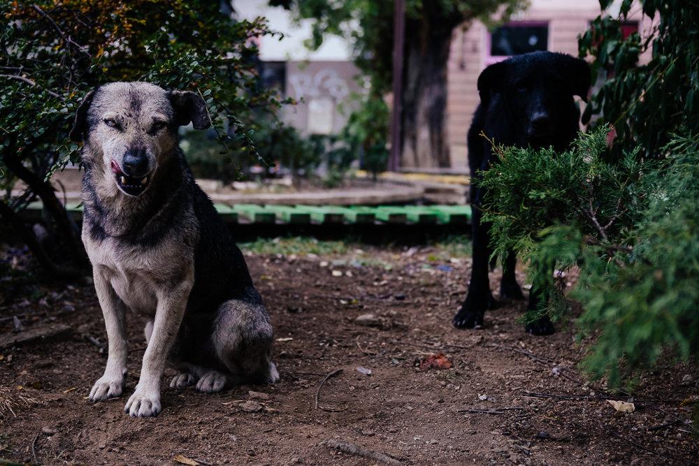 Sarajevo dogs. Day 5