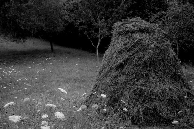 viewbook hay stack 1 IMG_3646.jpg
