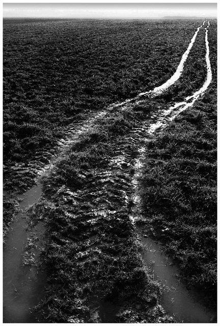 boerenlandschap-50.jpg