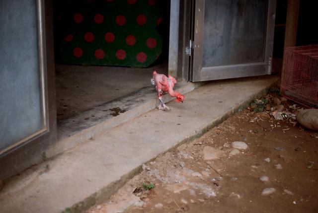 Scaleless Chicken