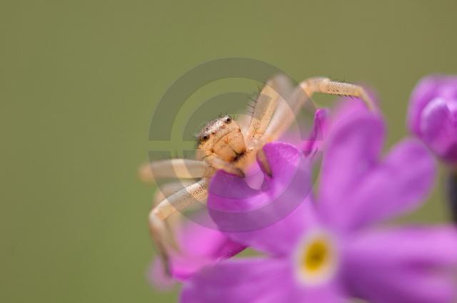 Insekten_Copyright_328.jpg
