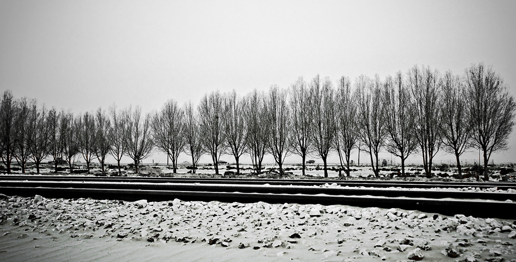 Winter trees on a hot summer