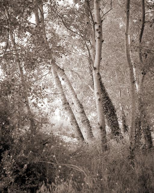 Italian_Woods.jpg