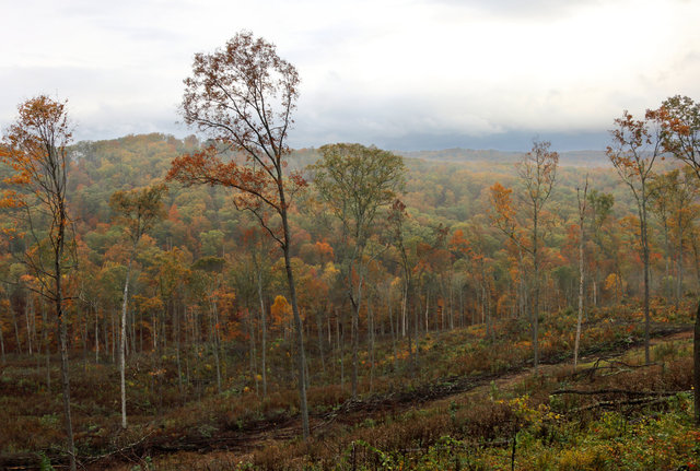 A recently logged hillside in southern Ohio.