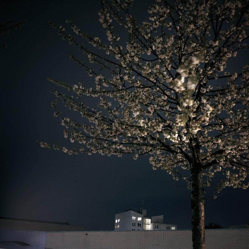 boom nacht.jpg