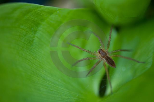 Insekten_Copyright_391.jpg