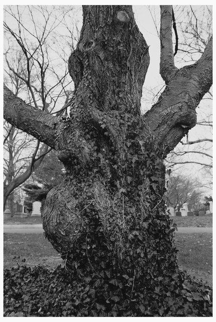 Trees  20.jpg