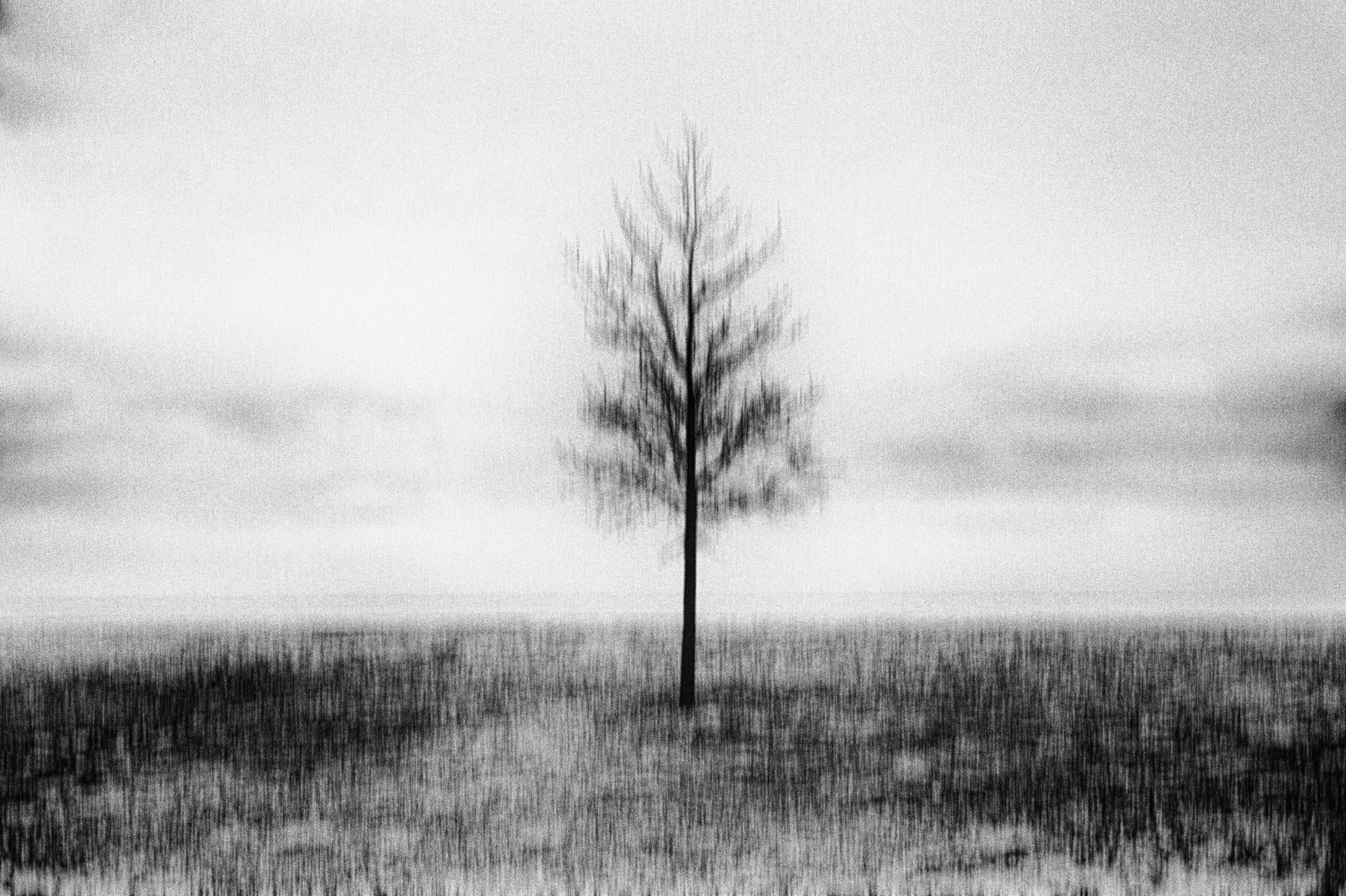 Lonely Tree © Bastiaan Woudt
