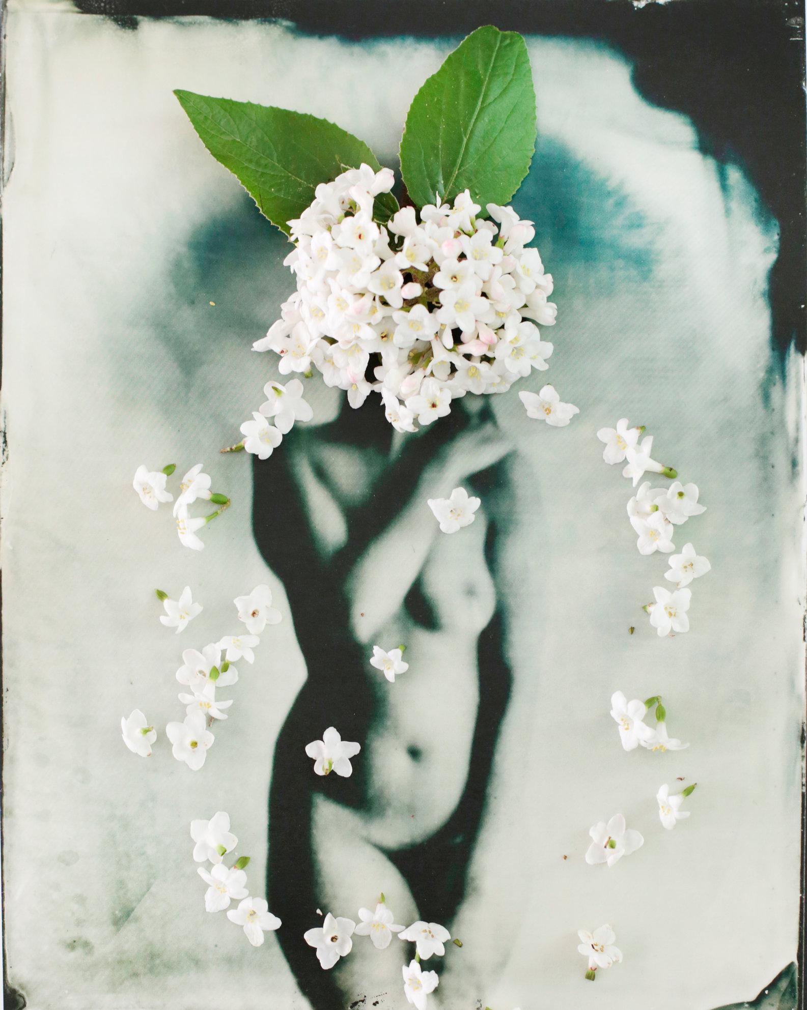 FLOWERS_1_008.JPG