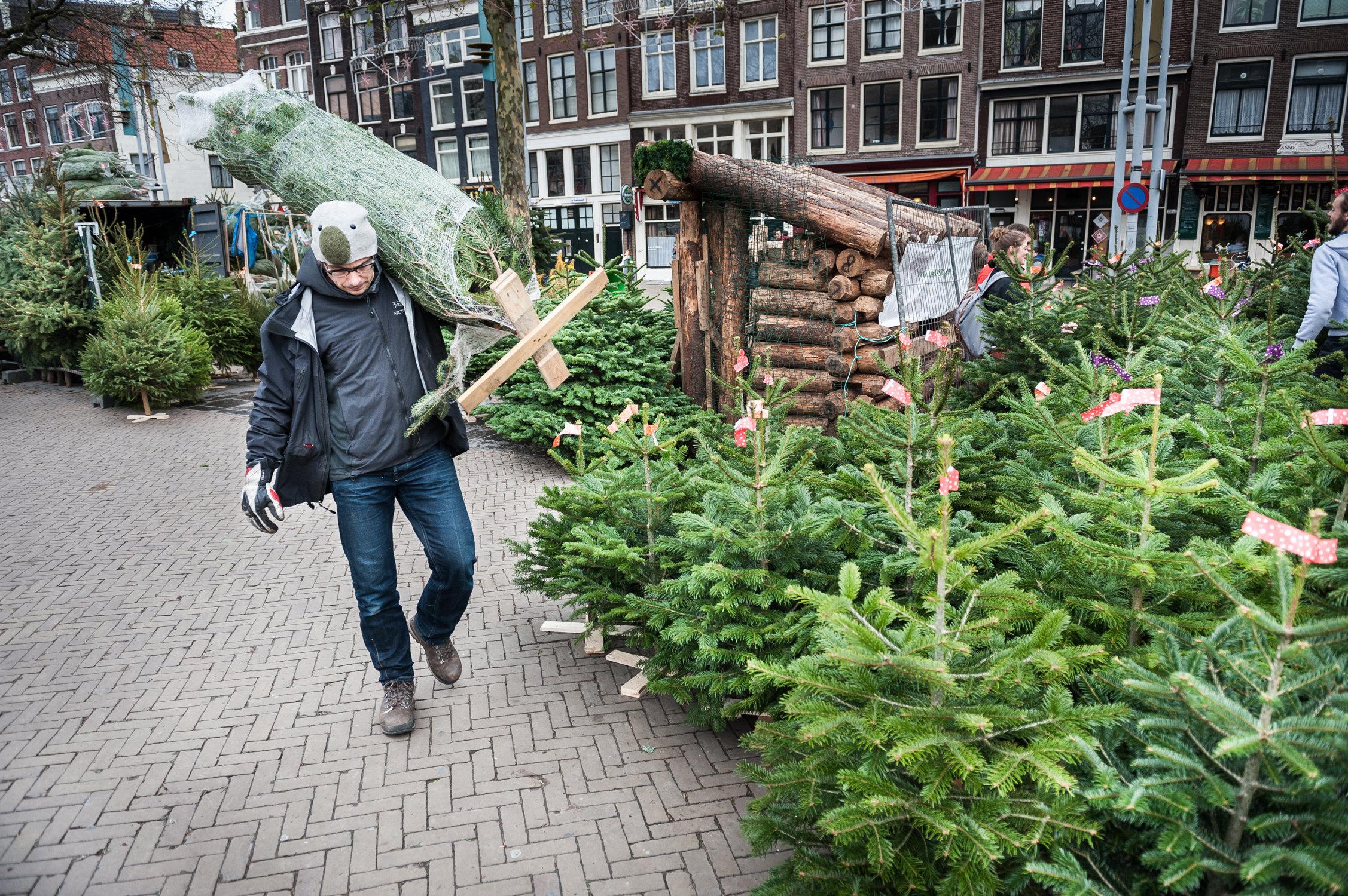 20131208-Kerstbomen.jpg