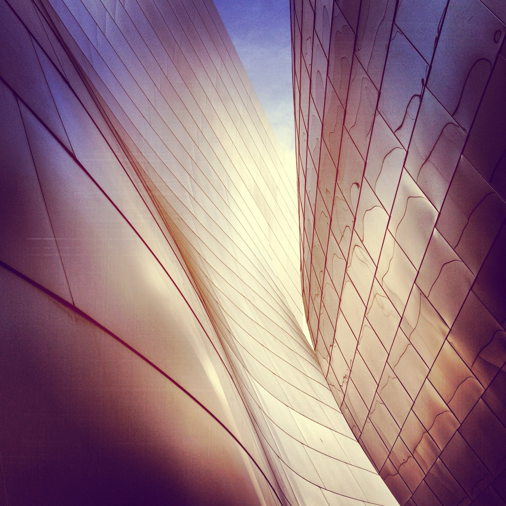 WALT DISNEY CONCERT HALL - ROSE 1