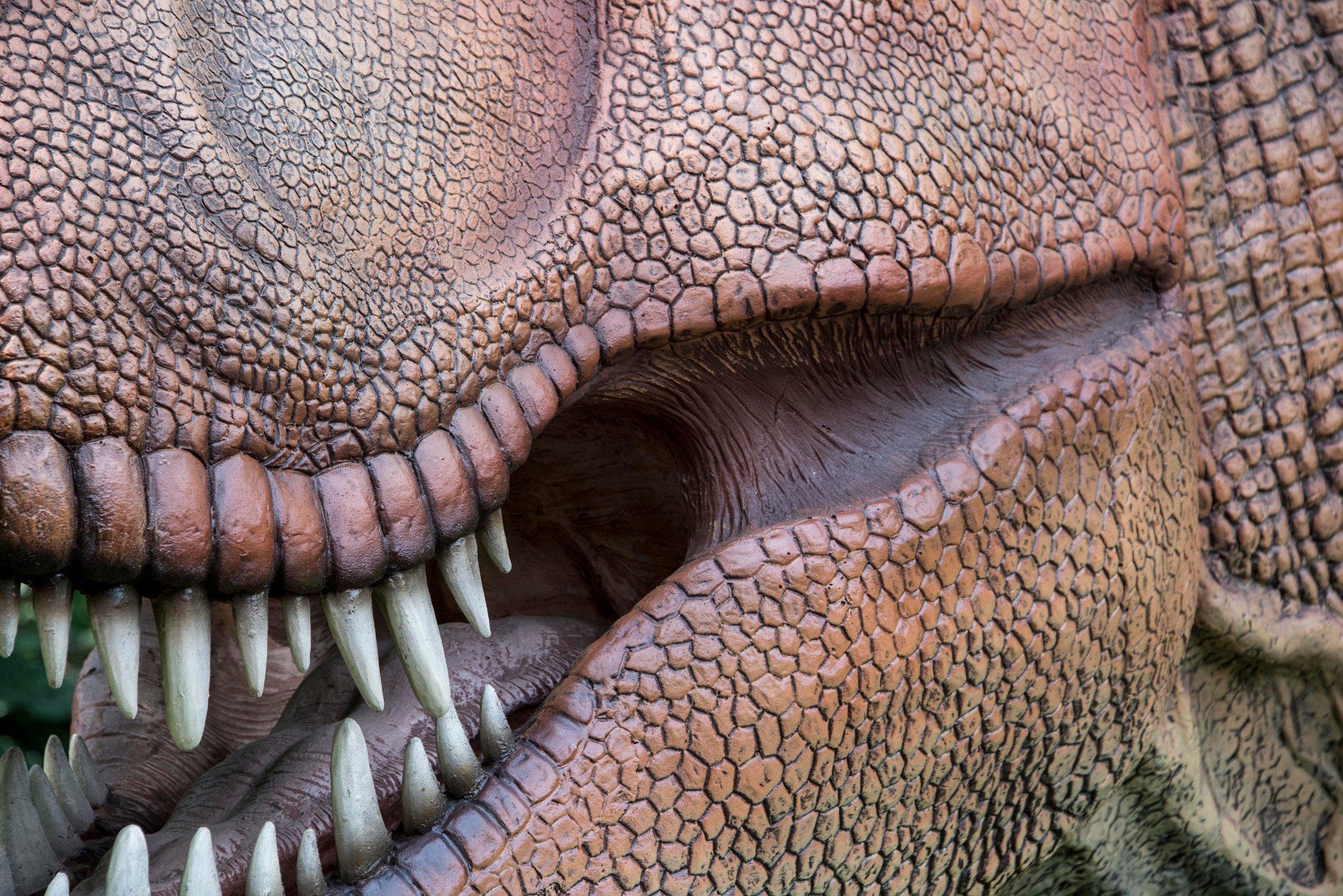 Dino 26.jpg