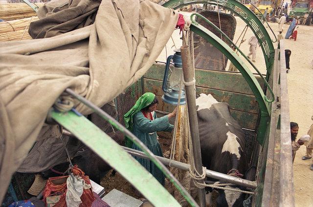 Afghan_0502_C37-8A copy.jpg