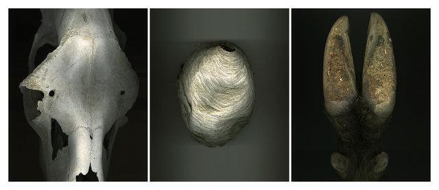 Skull_Nest_Hoof.jpg