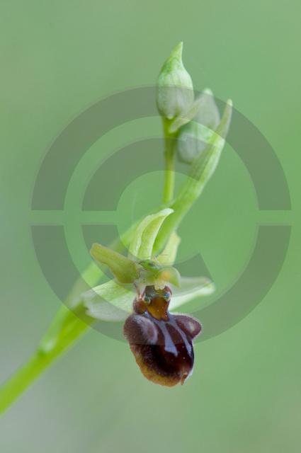 Pflanzen_Copyright_469.jpg