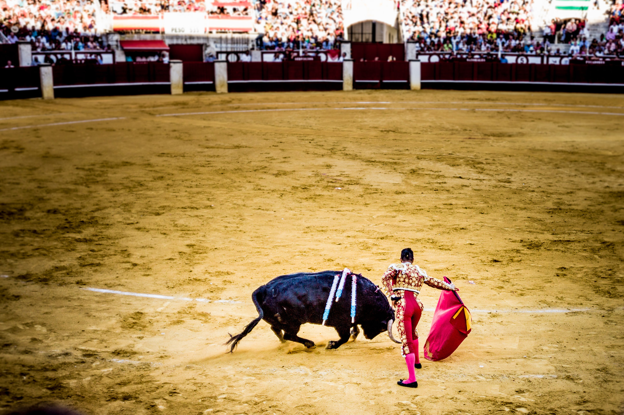 The Bullfight-92.jpg