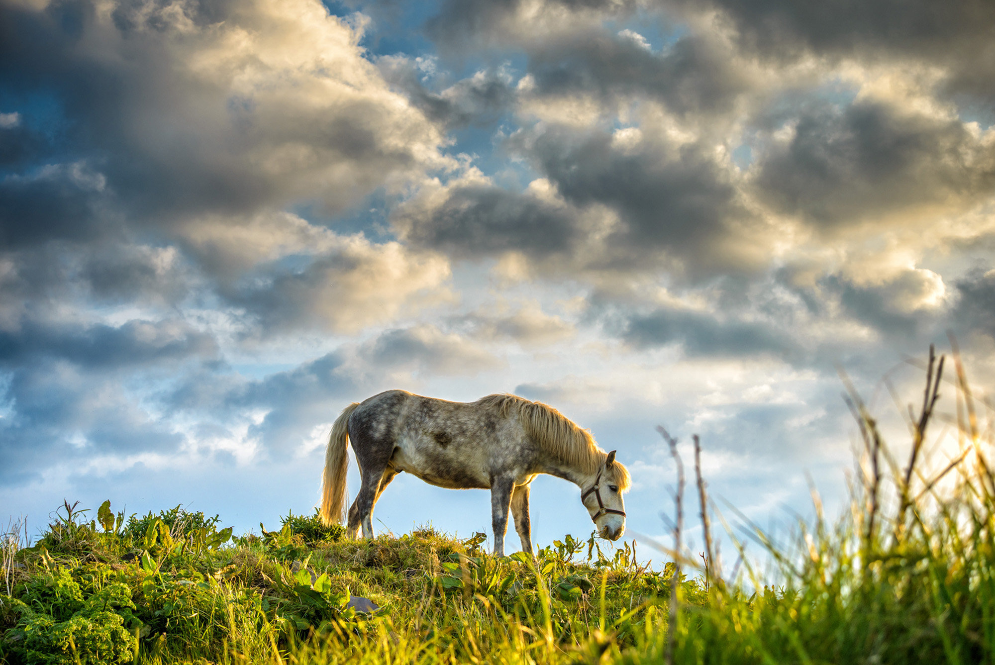 Lonely Horse, An Rinn, Co. Waterford