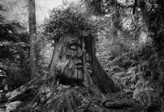 Tree-bw93.jpg