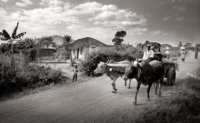 malawi koeien kopie warm kopie.jpg