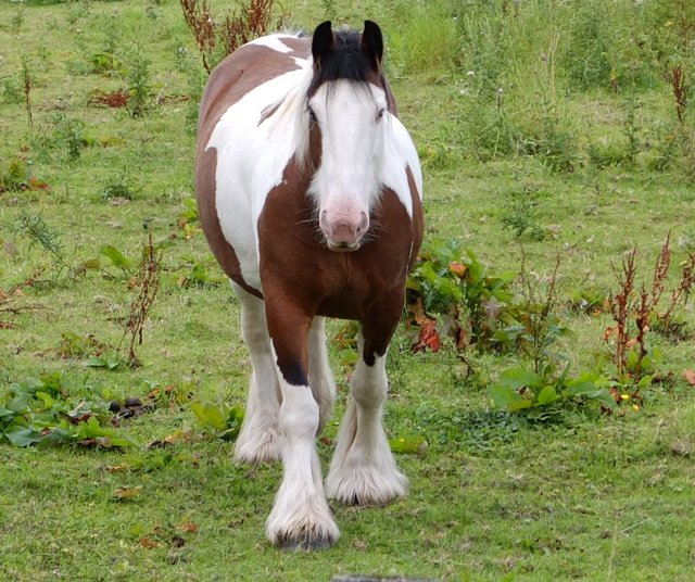 Curious Horse 3 by Alison Gracie