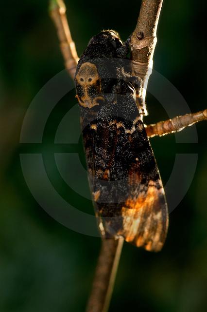 Tiere-Insekten-2.jpg