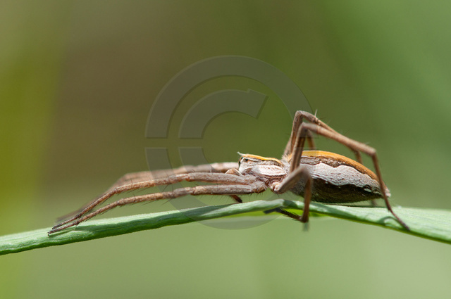 Insekten_Copyright_521.jpg