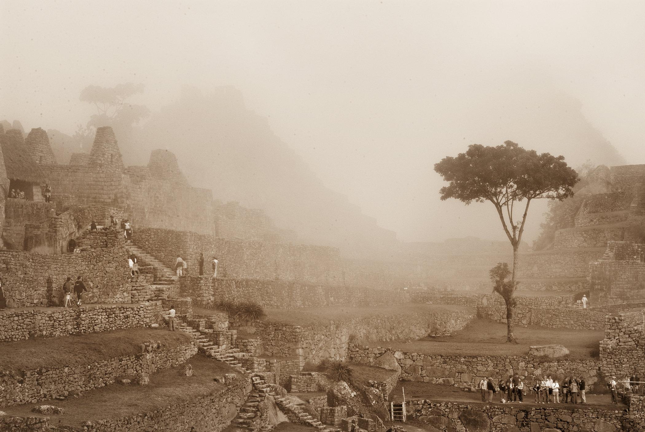 Machu Pichu Tree