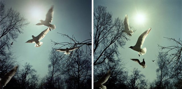 birds contactsheet 30.6 x 15.jpg