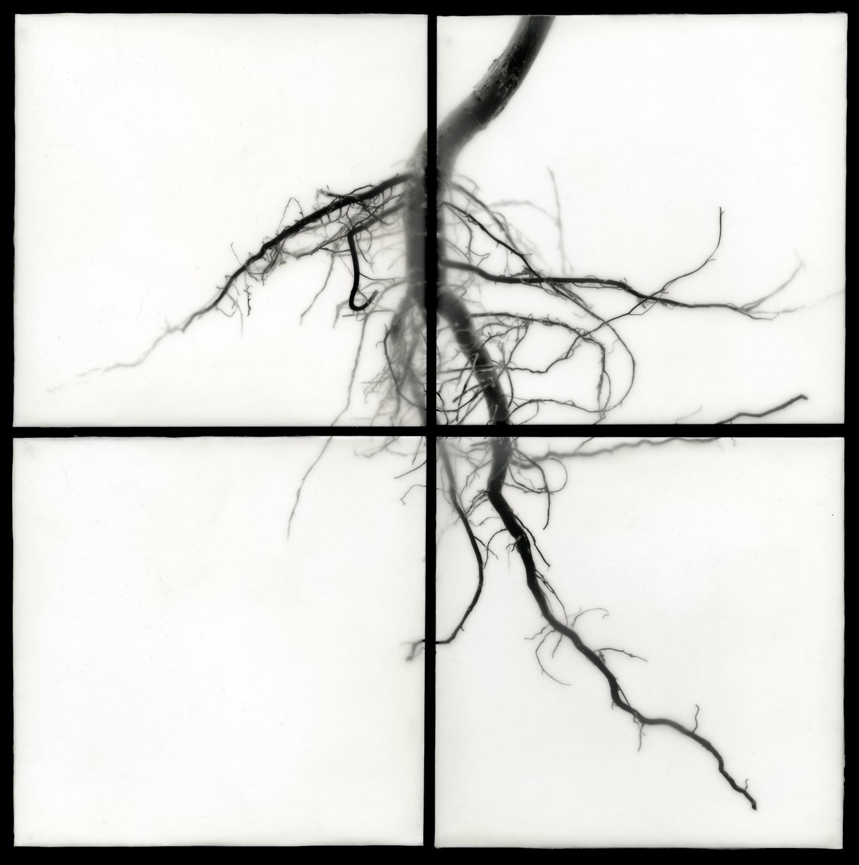 Root I