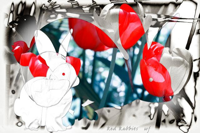 rabbitd19.jpg