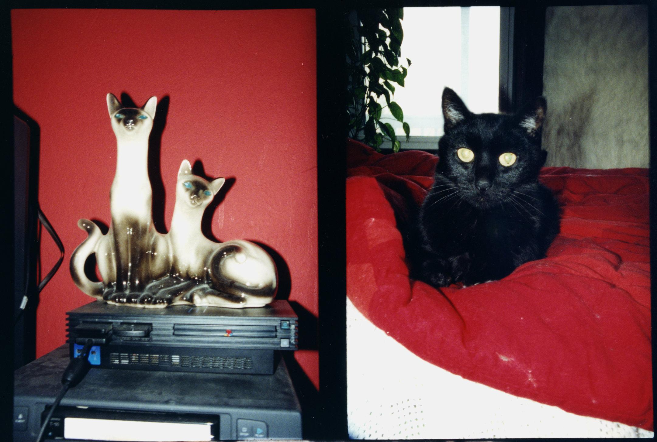 cat diptych 1.jpg
