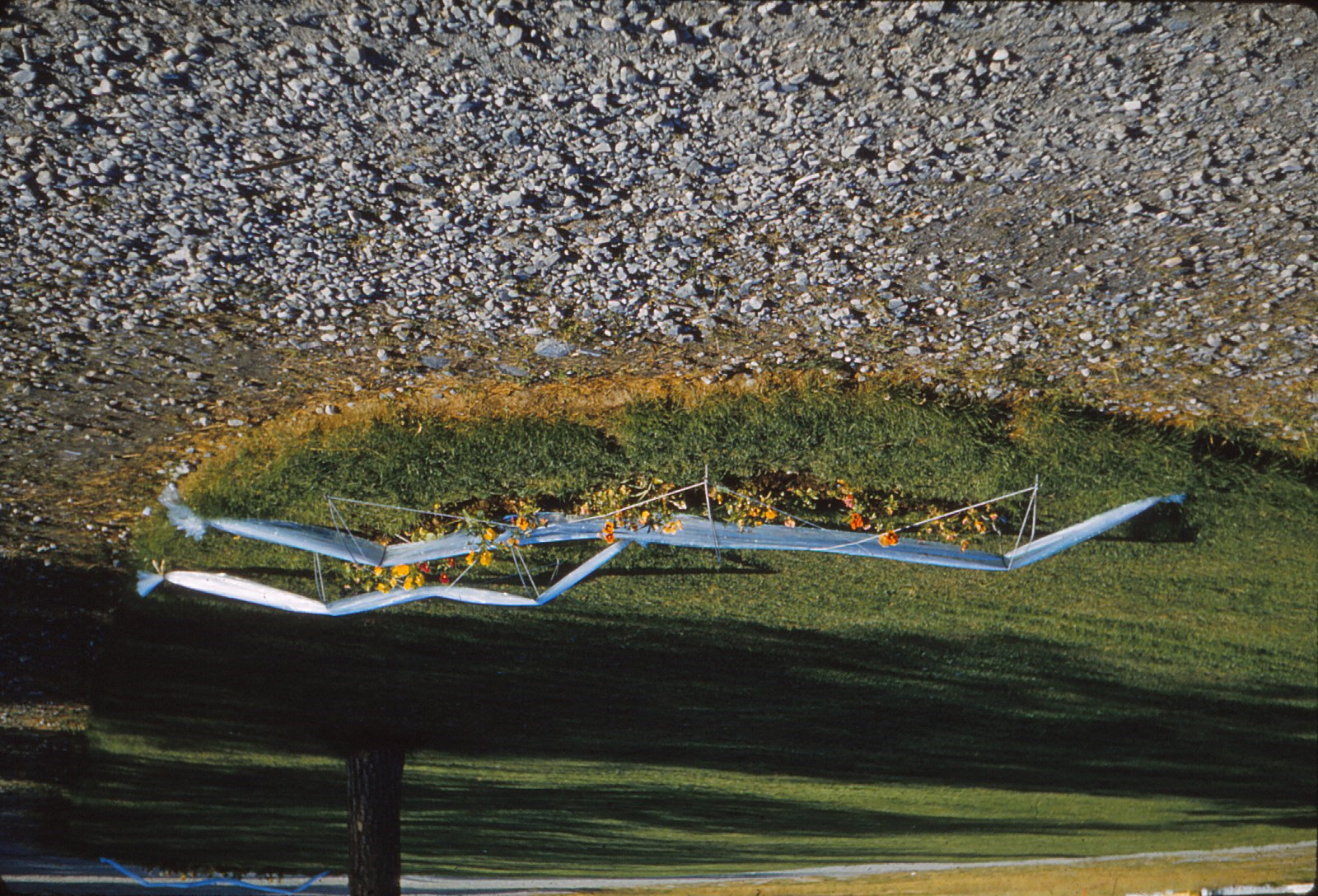 1025 (27) Karasjok: plastic over begonia's
